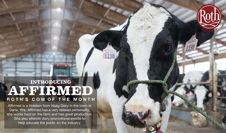 February Cow of The Month